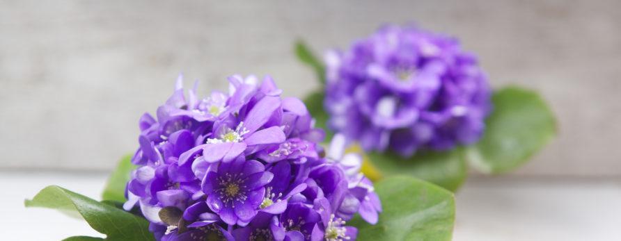 Flores para cultivar em casa